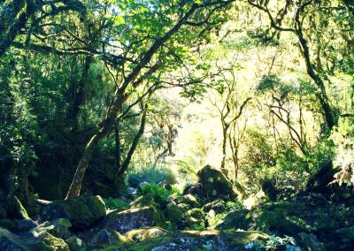 trilha-caminho-por-baixo-cascata-do-avencal