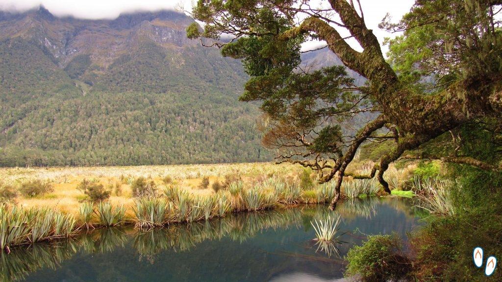 Mirror Lakes, estrada para Milford Sound