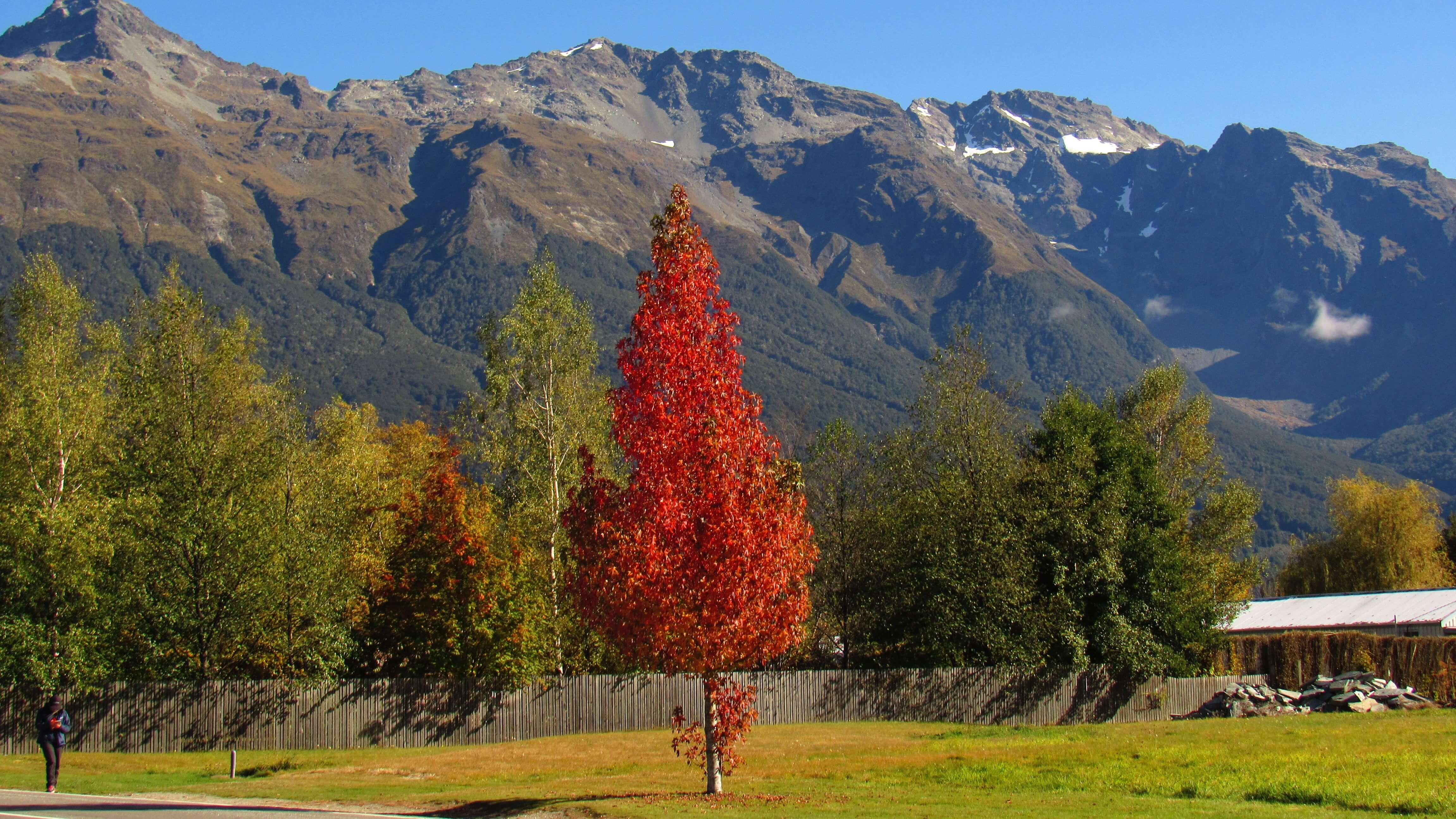 81-outono-na-nova-zelandia