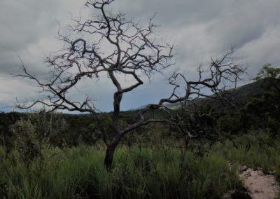 cerrado-brasileiro-complexo-paraiso