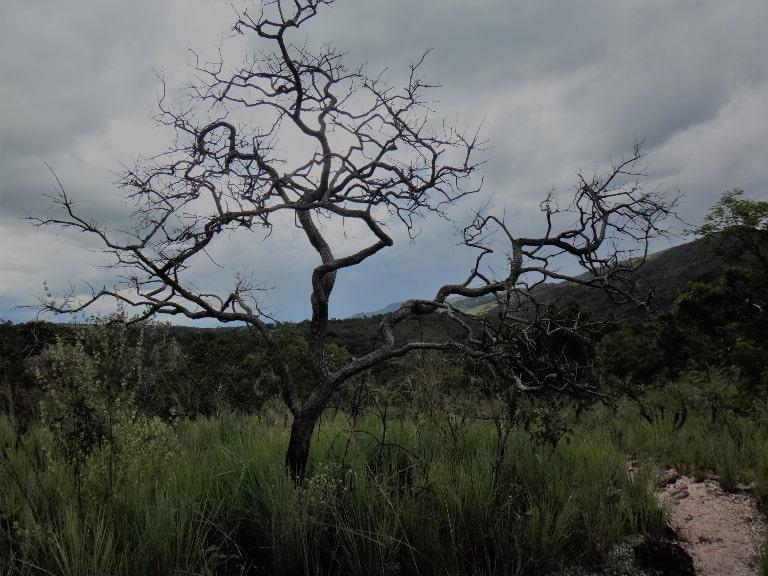 Imagem do cerrado mineiro no Complexo do Paraíso, em Delfinópolis, MG