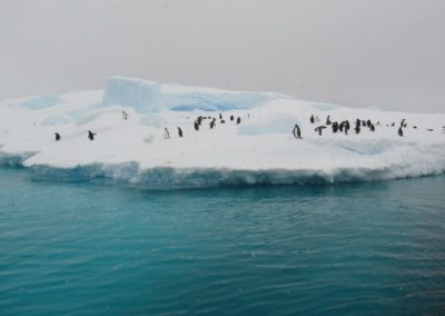 penguin-life-antarctica-pleneaubay1024