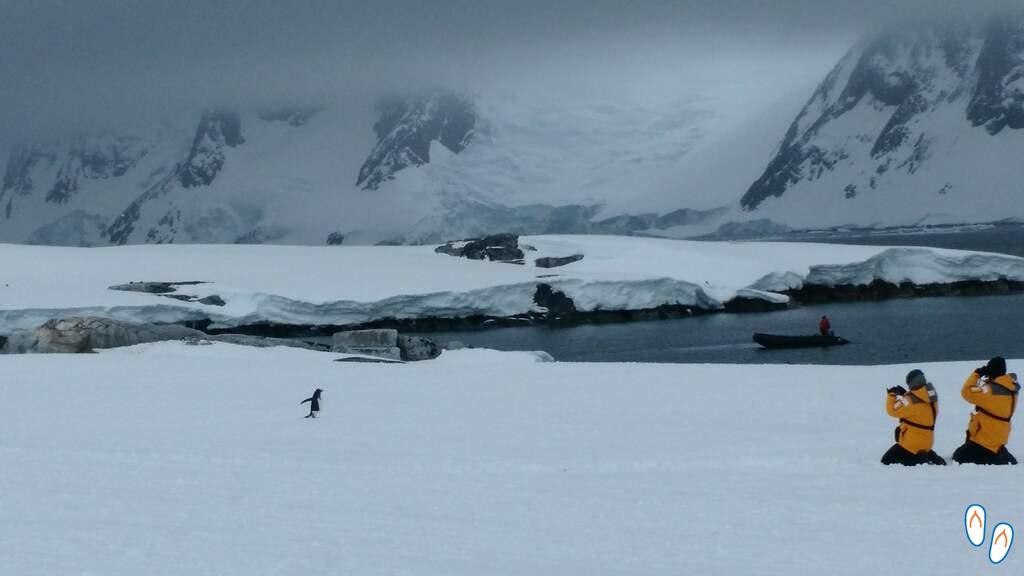 fotografando pinguins na Antártida