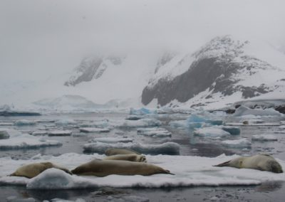 antarctic-wildlife-pleneau-bay