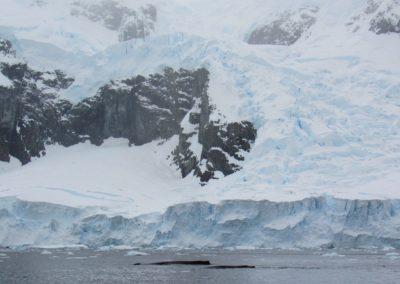 baleias-na-antartida-paradise-harbour
