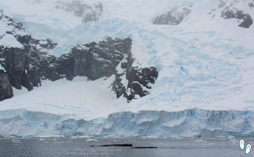 Avistamento de baleias na Antártida