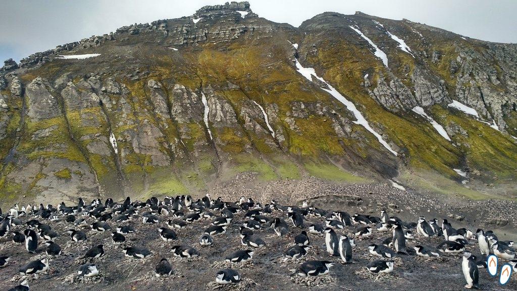 Ninho de pinguins na Antártida