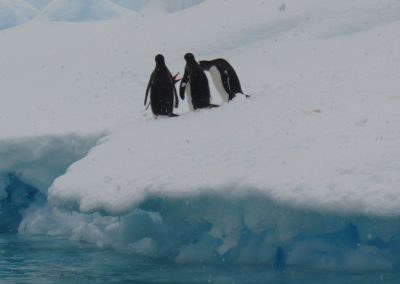 pinguins-discutindo-antartida-pleneau-bay