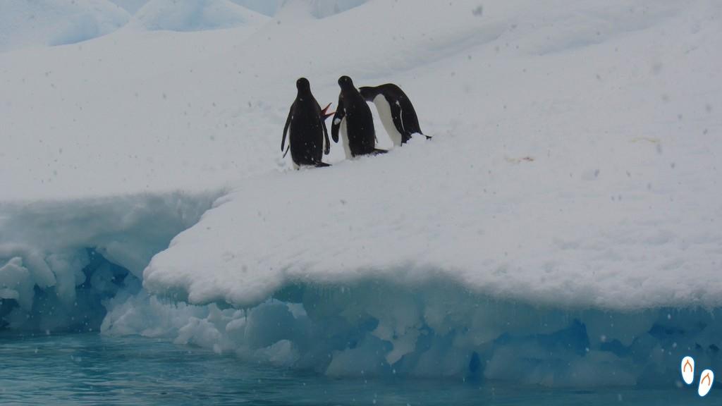 Pinguins discutindo quem pula primeiro
