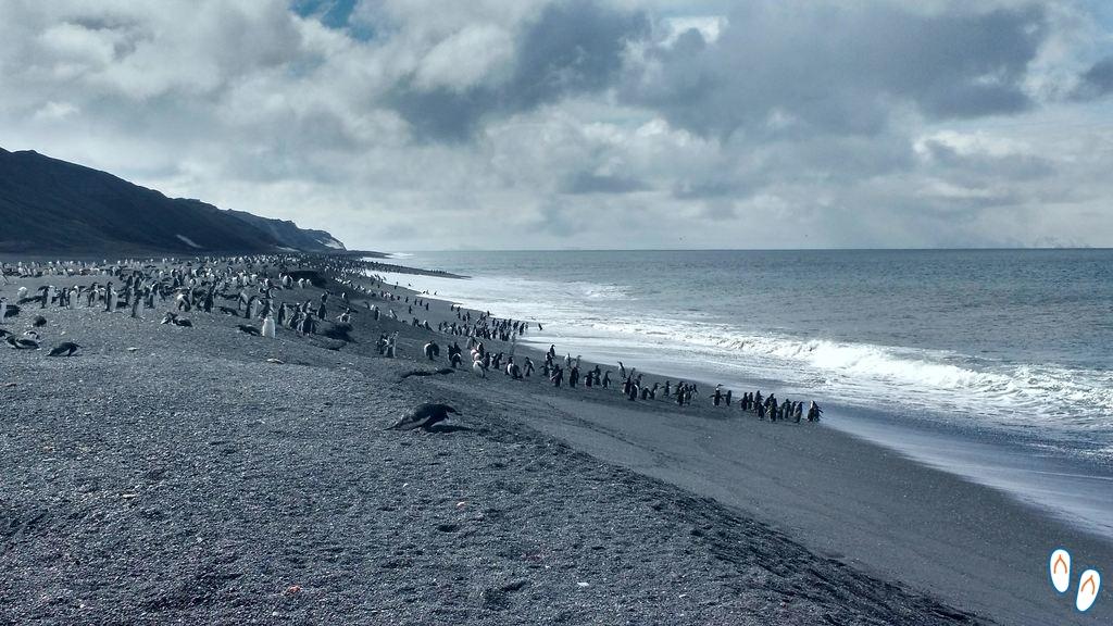 Praia de pinguins na Antártida