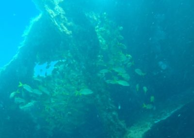 cardume-mergulho