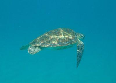 nadar-com-tartarugas-fernando-de-noronha