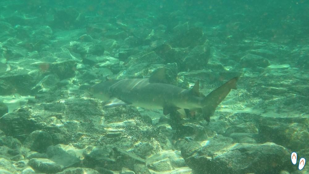 Vida marinha em Fernando de Noronha