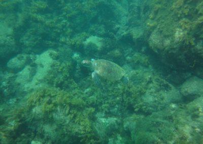 vida-marinha-fernando-de-noronha