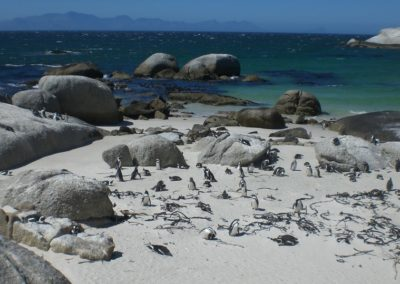 boulders-beach-cidade-do-cabo