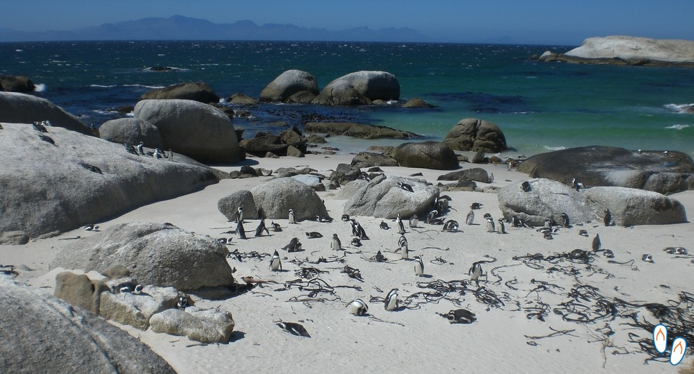 Boulders Beach com pinguins africanos, África do Sul