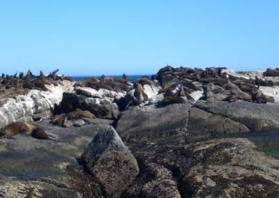ilha-das-focas-cidade-do-cabo