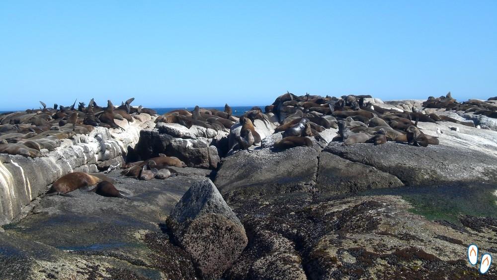 Ilha das Focas, Cidade do Cabo, África do Sul