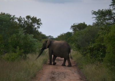 elefante-safari-na-africa-do-sul