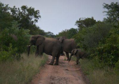 elefantes-africa-do-sul
