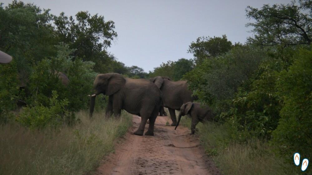 Elefantes na África do Sul