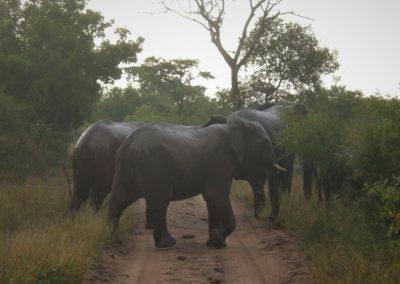 elefantes-big-5-kruger