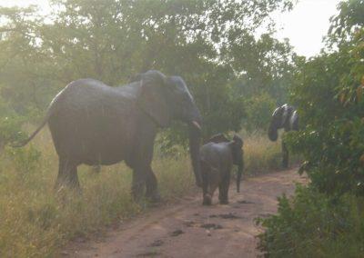 elefantes-kruger-africa